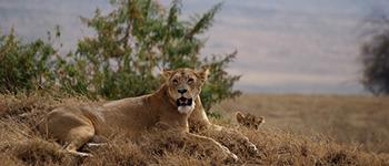 Ngorongoro tours