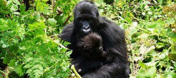 5 Days Virunga Gorillas & Nyiragongo Hike