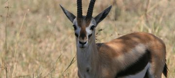 How to save on your safari in Uganda