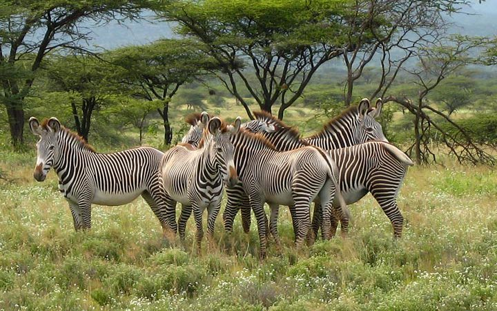3 Day Samburu Game Reserve Safari