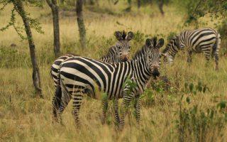 3 Days Lake Mburo Wildlife Safari