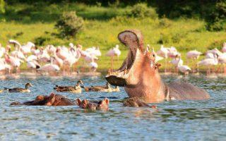 3 Days Lake Naivasha and Lake Nakuru