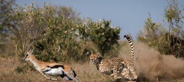 3 Days Ruaha Fly In Safari Holiday