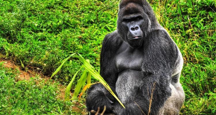 3 Day Rwanda Gorilla Expedition