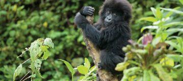 16 Days Kenya, Tanzania & Uganda Gorillas