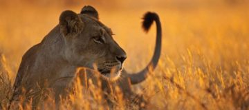4 Days Luxury Flying Safari to Selous Game Reserve