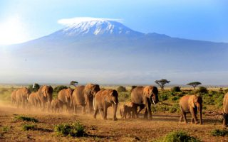 5 days Kenya Safari