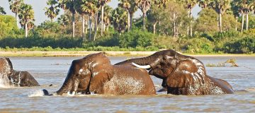 6 Days Best of South Tanzania Trip
