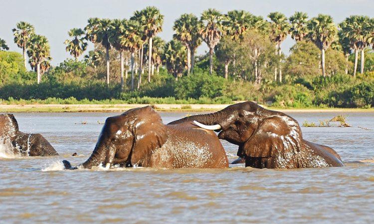 6 Days Best of South Tanzania Trip