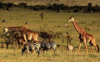6 Days Kenya Wildlife Safari Highlights
