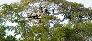 Arabuko Sokoke National Park