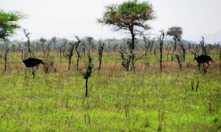 Bokora Wildlife Reserve