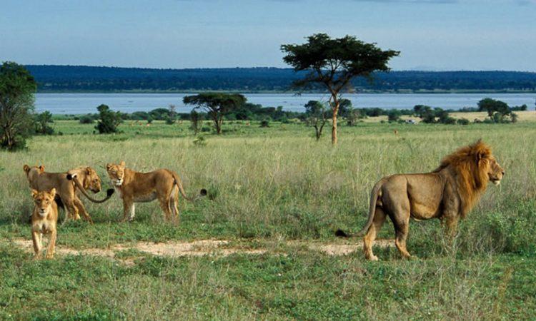 Bugungu Wildlife Reserve