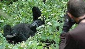Gorilla trekking in Bwindi