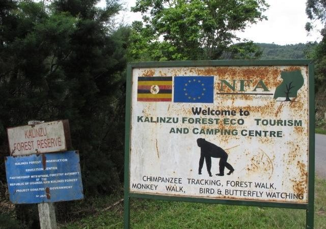 Kalinzu Forest Reserve