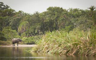 Lefini Faunal Reserve