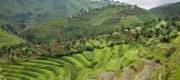 Low and High Seasons in Uganda