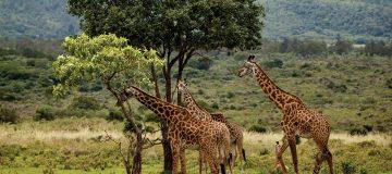 Mount Meru National Reserve