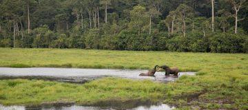 Nouabale Ndoki National Park