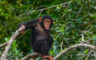 Ougoue Lekiti National Park