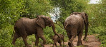 Rimoi National Reserve