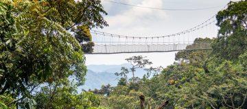 The Nyungwe Canopy Walk Experience
