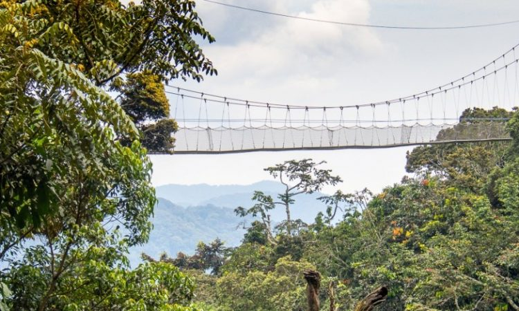 The Nyungwe Canopy Walk Experience