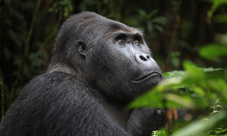 Why visit Congo