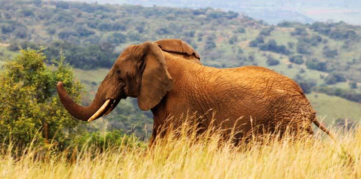 Wildlife Safari Tips for Rwanda