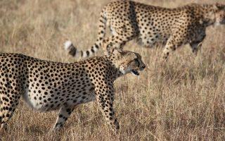 6 Days Kenya Safari Adventure