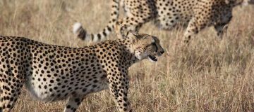 6 Days Kenya Safari Adventure