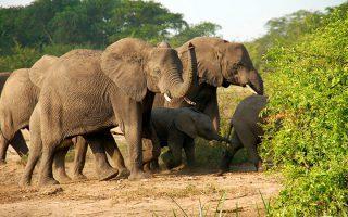 10 day Uganda Rwanda Safari