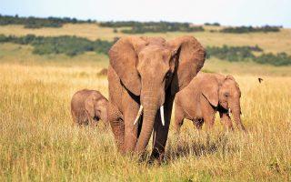 Tailor Made Kenya Trips