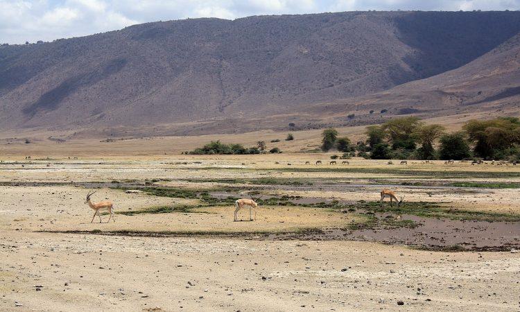 4 Days Best of Tanzania Safari