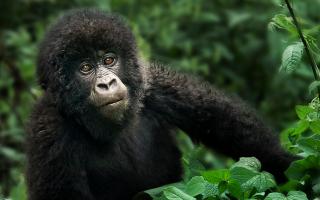 10 Days Uganda Gorillas