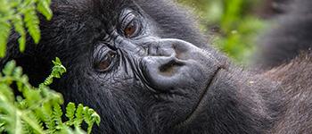 Group safaris to Congo