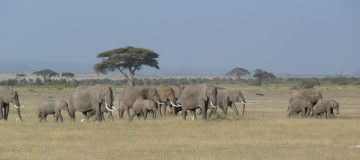 19 Days Prime East Africa Safari