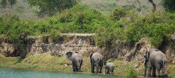 11 Days Best of Uganda & Tanzania Safari