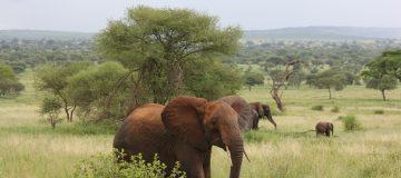 4 Days Best of Tarangire, Ngorongoro & Serengeti