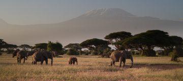 4 Days Amboseli & Tsavo
