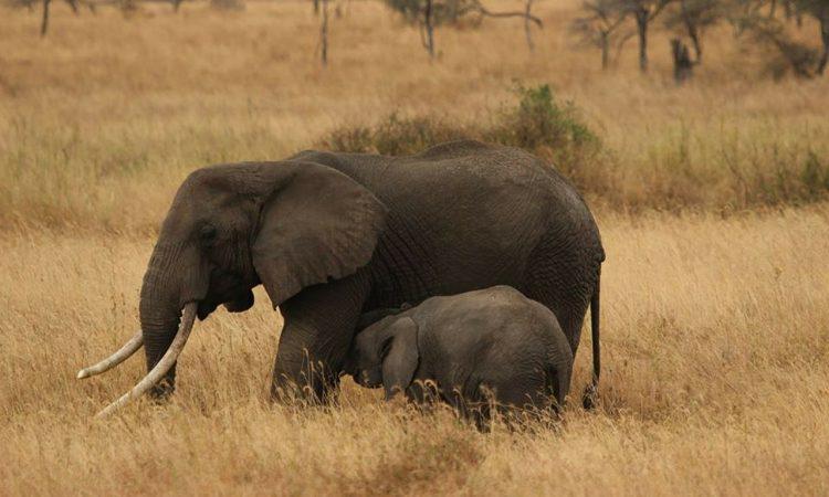 9 Days Tanzania and Kenya Wildlife Safari