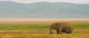 Africa tailor made trips to Tanzania