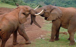 3 Days Aberdare Wildlife Safari