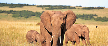Africa group safaris to Tanzania