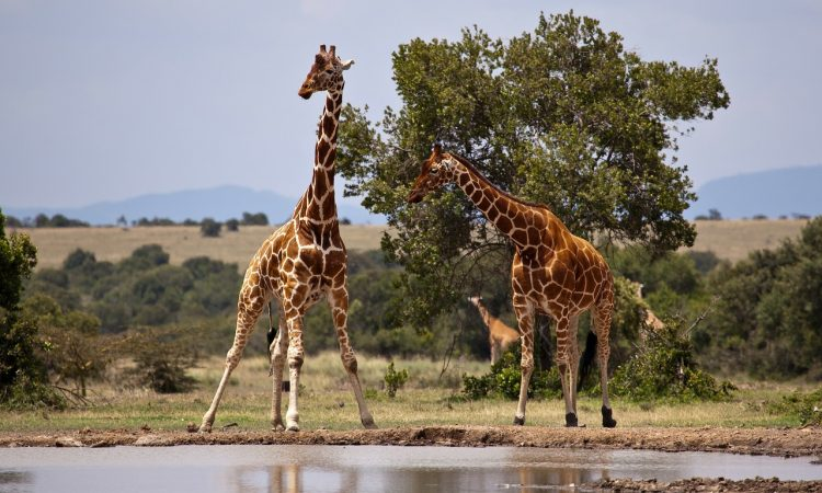 3 Days Samburu Wildlife Safari