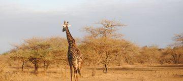 Tailor Made Trips to Uganda