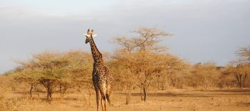 3 Days Tsavo East & West
