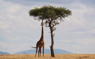 12 Days Discover Kenya Safari