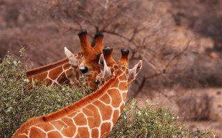 6 Days Amboseli, Aberdare & Nakuru safari