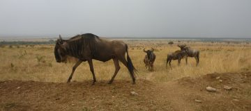 7 Days Best of Kenya & Tanzania